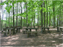 Setting up a forest school isn't easy